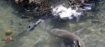 Un baigneur mordu par un requin en Nouvelle-Calédonie