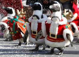 Les pingouins de Noël frappés de disparition à Castres