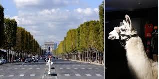 Un sosie de Serge le Lama en tête de cortège sur les Champs Elysées