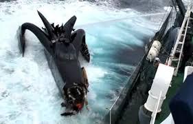 Antarctique: Sea Shepherd au contact des baleiniers japonais