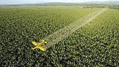 Pesticide : le chlordécone augmente le risque de prématurité