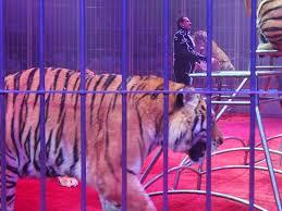 Les fauves d'un cirque russe bloqués sur un parking polonais faute de visas
