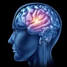 L'Académie de médecine lance un appel au don de cerveau post mortem