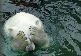 L'ours polaire argentin Arturo, déprimé et las de la canicule, lorgne vers le Canada