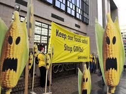 Australie: procès d'un fermier contre son voisin pour contamination par OGM de ses cultures