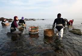 Trois jours après leur disparition, des plongeuses japonaises retrouvées agrippées aux coraux