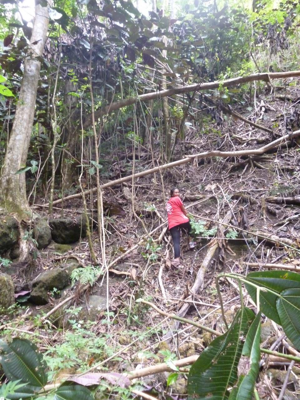 La sauvegarde du Monarque de Tahiti: une chaine de solidarité hors du commun