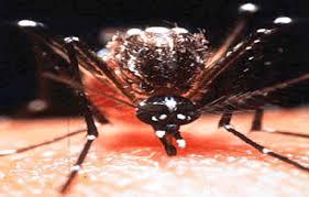 La dengue a fait sept morts à Fidji