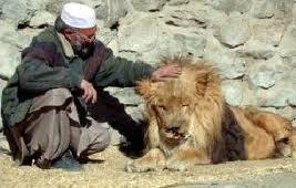 Une nouvelle vie au zoo pour le lion qui vivait sur un toit de Kaboul