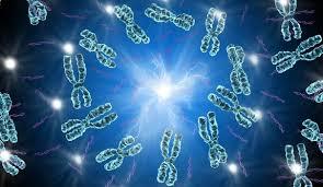 """Chromosome de synthèse, un nouveau pas vers la création du """"vivant artificiel"""""""