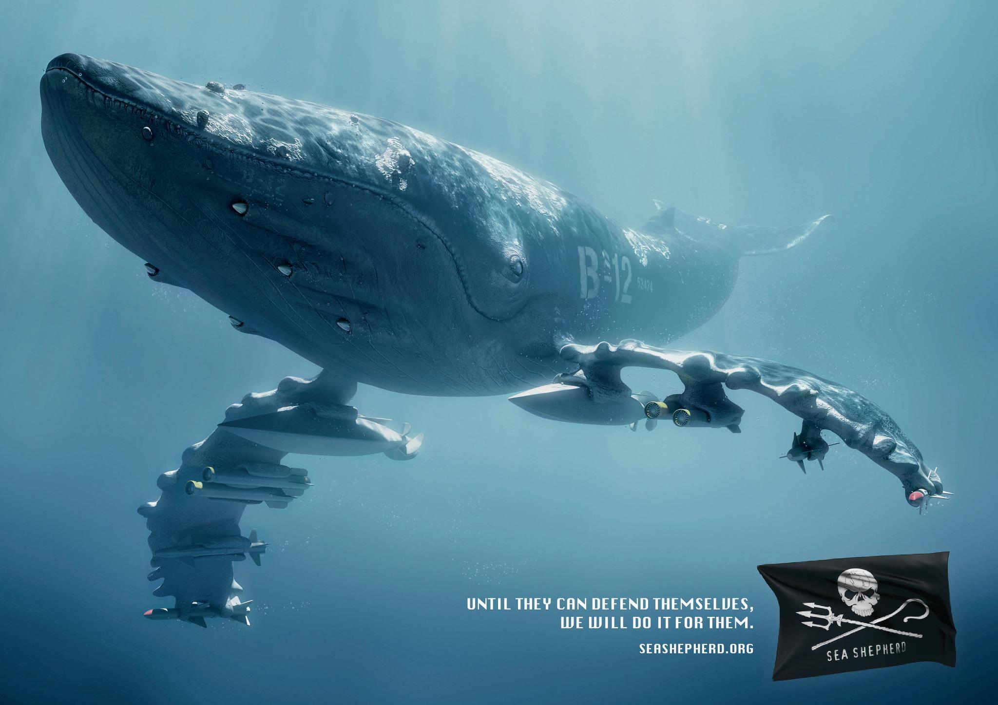 Sea Shepherd militera dans l'Atlantique si Tokyo cesse sa chasse aux baleines