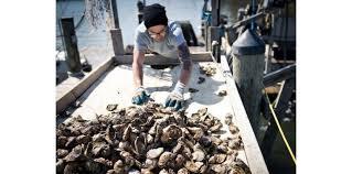 L'huître au menu, pour sauver la baie de Chesapeake