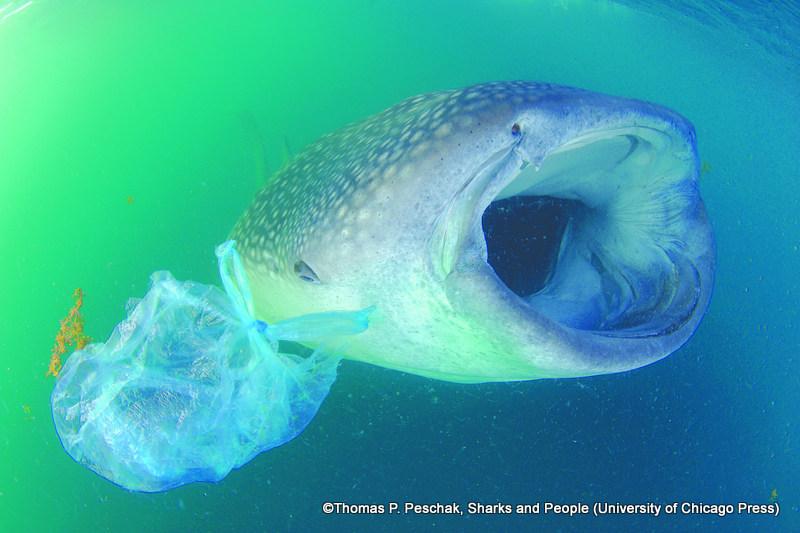 Hawaï et Los Angeles interdisent les sacs en plastique