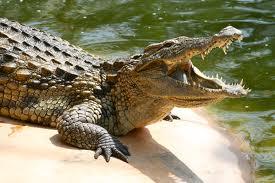 Un garçonnet de 11 ans dévoré par un crocodile