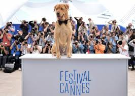 Les chiens Luke et Body, vainqueurs ex-aequo de la Palm Dog