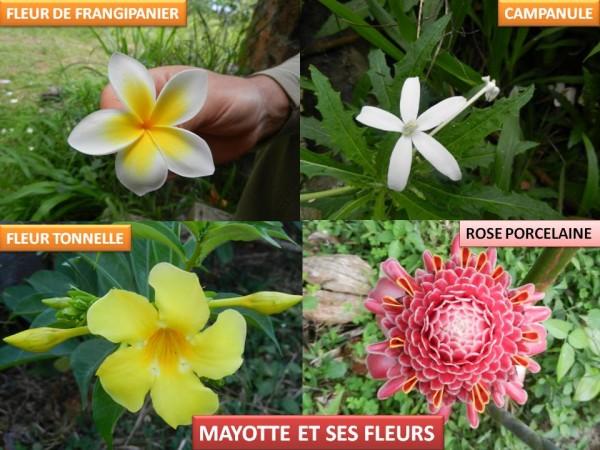 Près d'une espèce de la flore de Mayotte sur deux menacée