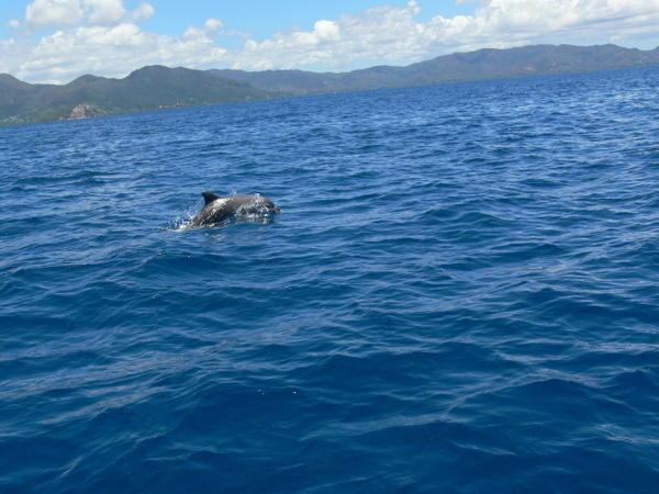 Mammifères et oiseaux marins de N-Calédonie et de Wallis et Futuna vont être recensés