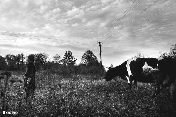 Ukraine: Scènes de far west avec le vol de 200 vaches à la frontière russe