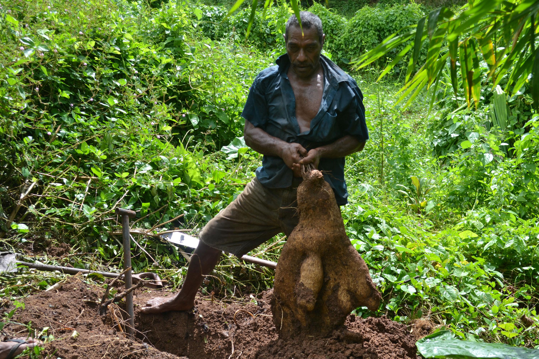 Un cultivateur de Cicia exhibe fièrement le fruit de sa récolte qu'il présentera au festival de la diversité.