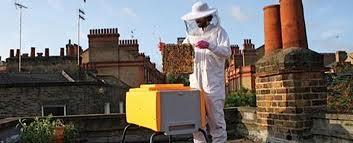 Les abeilles sauvages se portent bien en ville