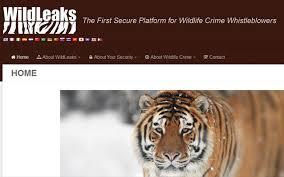Le site WildLeaks veut traquer les têtes des réseaux de braconnage