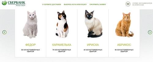 Une banque russe prête des chats à ses clients