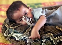 Les animaux exotiques de compagnie, une dangereuse passion au Costa Rica