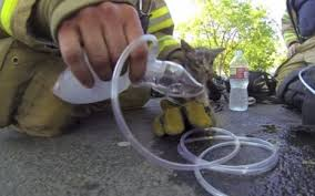 Un chat sauvé des flammes et réanimé par les pompiers à Berlin