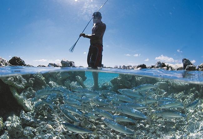 A Takaroa, la pêche au koperu dans les pièges à poissons traditionnels (Photo Philippe Bacchet, en page 46 du livre).