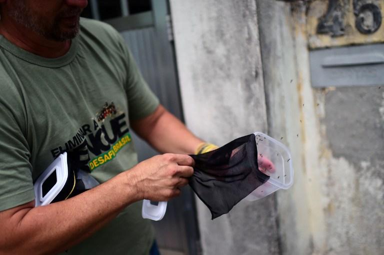 """Brésil : lâcher de milliers de moustiques """"vaccinés"""" contre la dengue à Rio"""