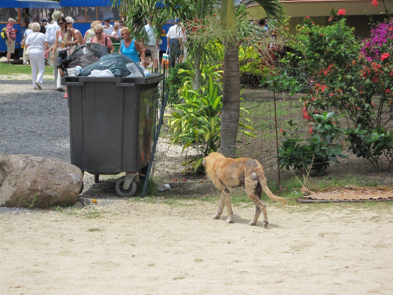 Les chiens errants sont une vision commune à Bora Bora. Ici une photo prise sur le blog du bateau de croisière The Star Princess