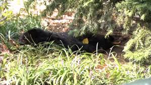 New York : émoi après la découverte d'un ourson mort à Central Park