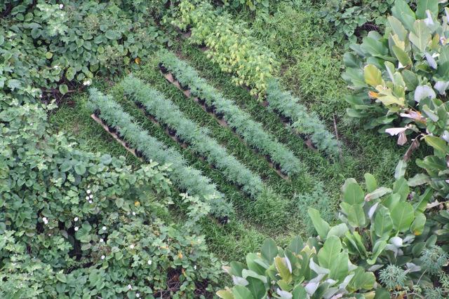 6000 pieds de paka saisis sur deux op rations distinctes for Plantation cannabis interieur sans materiel