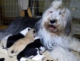 Une chienne adopte un lionceau dans un zoo en Pologne