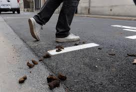 Espagne: une ville embauche des détectives anti-crottes de chien