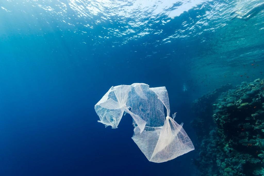 Un million et demi d'animaux victimes des déchets plastiques dans les océans