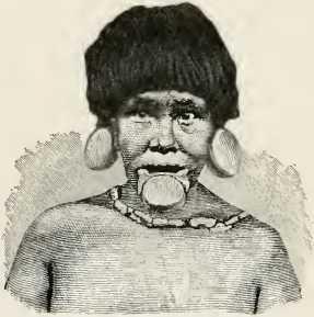Les Botocodus sont connus pour les grands disques en bois qu'ils portent que les lèvres et les oreilles