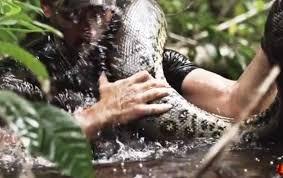 Avalé vivant par un anaconda, pour la télévision