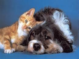 Suisse: une pétition pour que chiens et chats ne finissent plus à la casserole