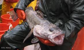 """Sea Shepherd lance ses navires contre les pêcheurs d'""""or blanc"""" en Antarctique"""