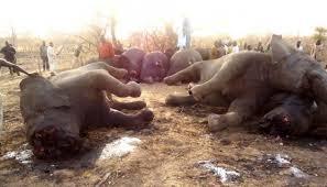 """Le massacre des éléphants d'Afrique """"hors de contrôle"""", extinction possible en une génération"""