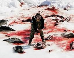 Chasse aux phoques: la Fondation Bardot satisfaite de l'arrêt des aides en Norvège