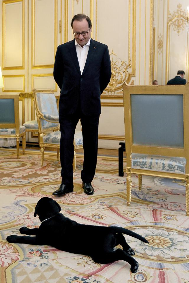 Philae, la nouvelle chienne de François Hollande