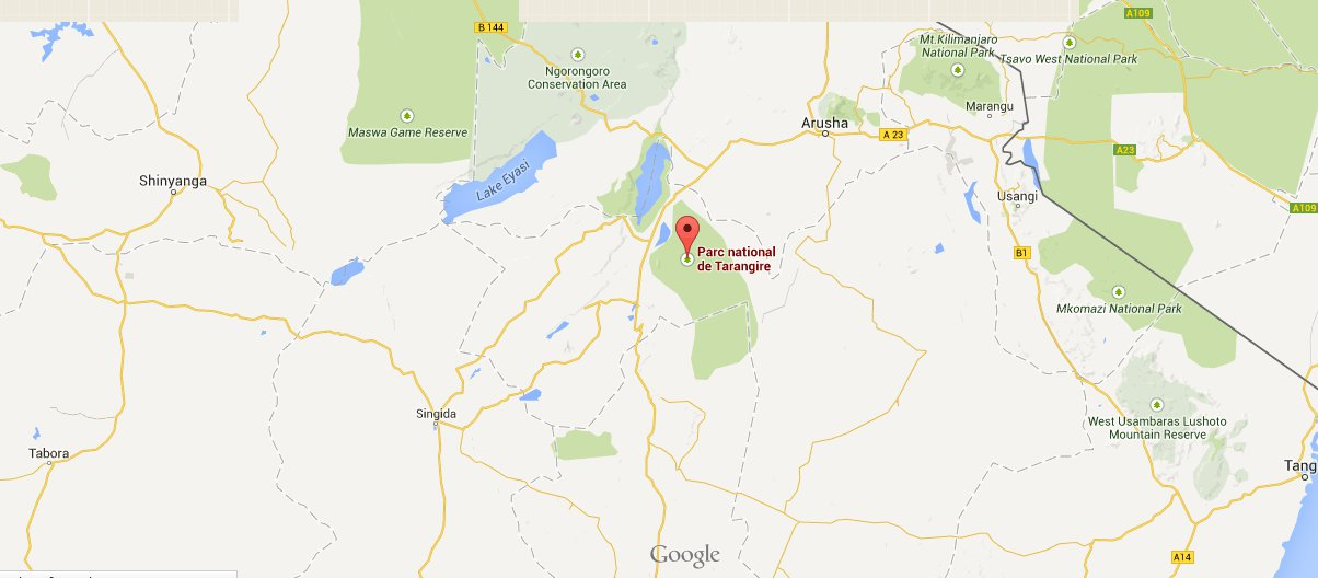 Tanzanie: six lions tués par des Masaï dans le nord