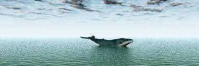 Le Japon va conduire prochainement des recherches sur les baleines dans l'Antarctique, mais sans les chasser