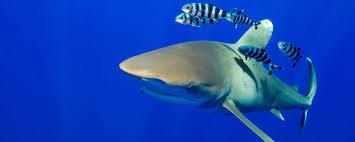L'ONU progresse vers un traité pour protéger la biodiversité en haute mer