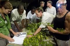 Biodiversité: prochaine expédition scientifique dans le sud de la Guyane