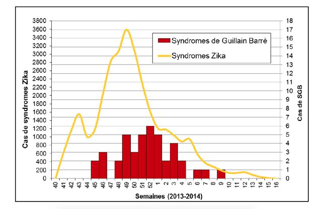 Courbe épidémique des cas de syndrome Guillain Barré durant l'épidémie de zika en Polynésie française 2013-2014 (extrait du bulletin de l'Institut national de veille sanitaire).
