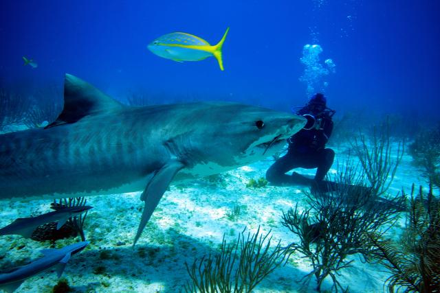 Sea Shepherd, gardien de nos requins
