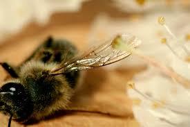 Les apiculteurs en colère après le rejet par le Sénat d'un texte sur les insecticides